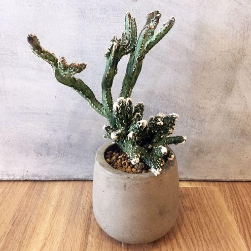 盆栽サボテン